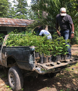 Haitian reforestation project promotes sustainability